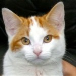 Subhanallah, Inilah Rahasia Penciptaan Kucing