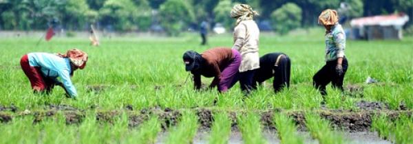 Pemprov Jabar Akan Adopsi Teknologi Pertanian Rusia