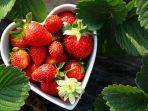 Makan Strawberry Bisa Menurunkan Kolesterol Secara Alami